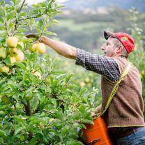 Andreas Sigmund, Apfelbauer aus Leidenschaft